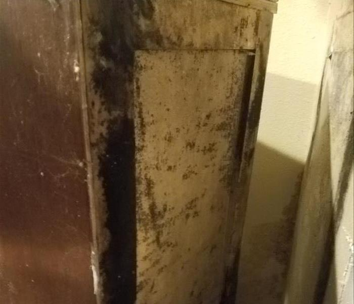 Mold growing behind kitchen cabinets